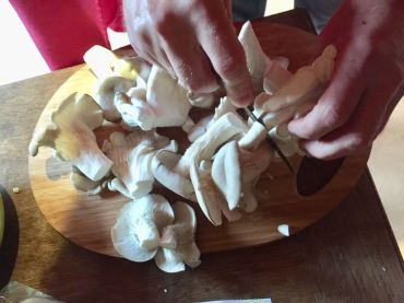 Cutting oyster mushrooms © cadwu