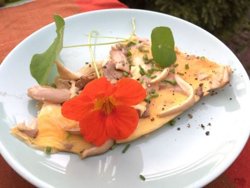 Omelet with Oyster Mushrooms © cadwu