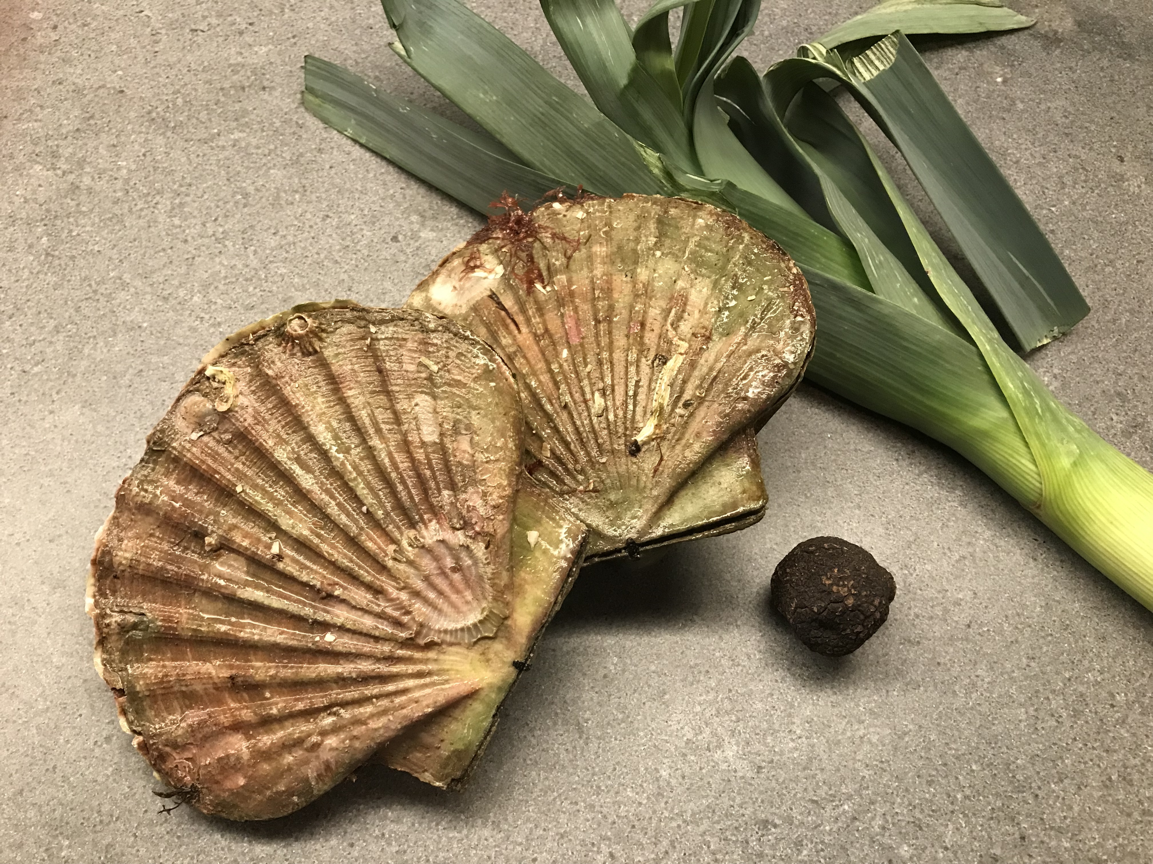 Ingredients of Scallops or Coqcuilles Saint Jacques with Winter Truffle © cadwu