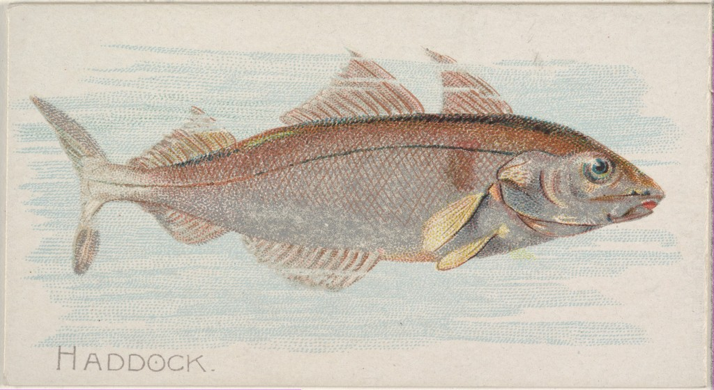 Haddock, from the Fish from American Waters series (N8) for Allen & Ginter Cigarettes Brands, 1889